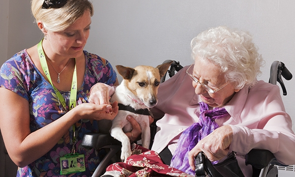 A woman carer and therapy dog with an elderly female patient