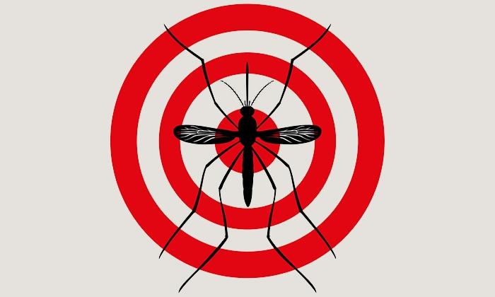 Zika3